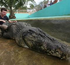 dubai mall crocodile