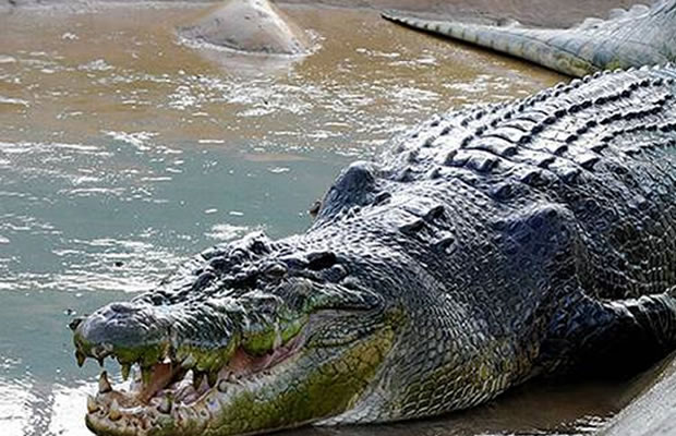 monster crocodile dubai